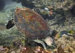 23_turtle02