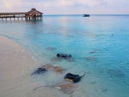 beachrays01