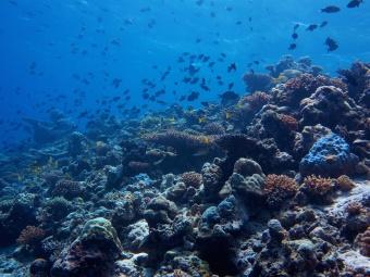 corals01