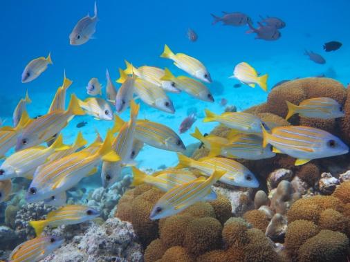 fishschool 03