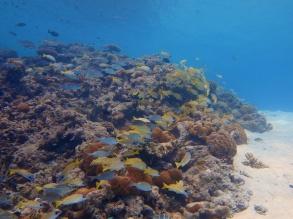 fishschool 06