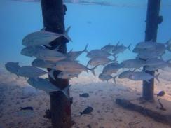fishschool 08