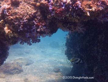 Longfish bannerfish