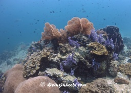 Healthy coral reef